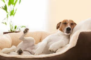 Hund im Bett abgewöhnen